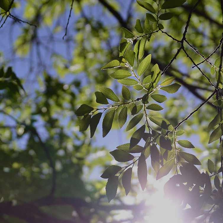 Puulehed päikese taustal mobiilipilt